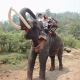 象のパワーと賢さはすごい