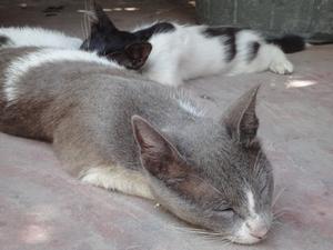 カイロのダハブホテルのたくさんの猫ともお別れ。ちょっと寂しい