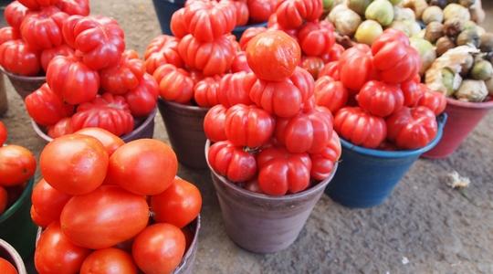 オアハカのアバストス中央市場に並ぶ新鮮なトマト
