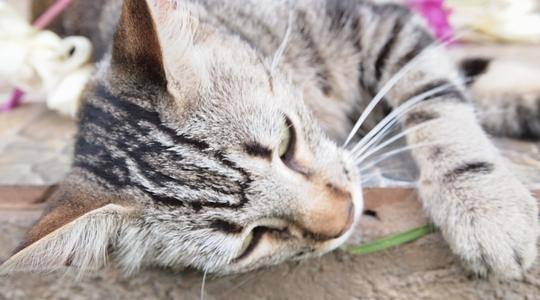 イースター島の日本人宿にいたネコ