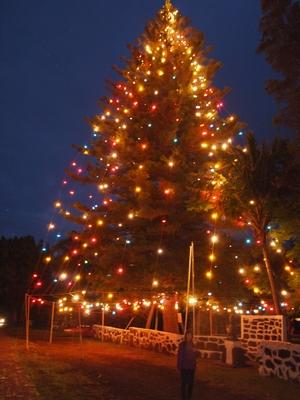 イースター島の巨大クリスマスツリー