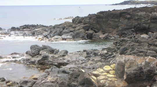 イースター島の海岸はウニがたくさん