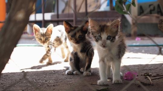 イースター島の安宿 Petero Atamuの隣の家の子猫