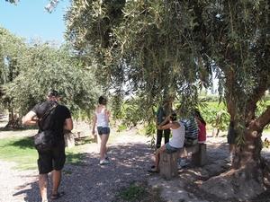 メンドーサのワイナリーツアーでワイン畑を見学