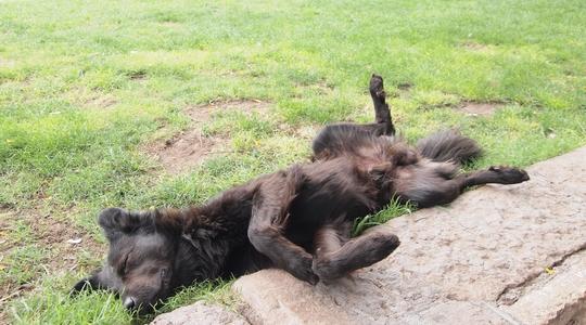 メンドーサの独立広場と広場で寝転ぶ犬。平和な場所