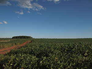 どこまでも続くおじいちゃんの大豆畑