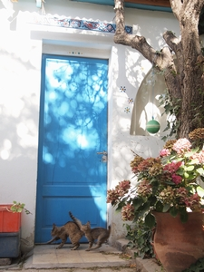 プエルト・マドリンの安宿「Posada del Catalejo」の子猫たち
