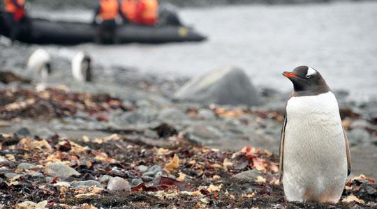 荒れるドレーク海峡を越え、いよいよ南極上陸。南極はぺんぎんの楽園