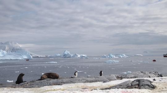 ついに南極大陸へ上陸。Neko Harborからの眺めはハンパない