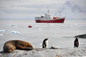 アザラシの隣にペンギン。南極半島近くの島Cuverville Islandはペンギンの楽園