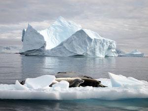 南極の海に浮かぶ流氷ではアザラシが昼寝