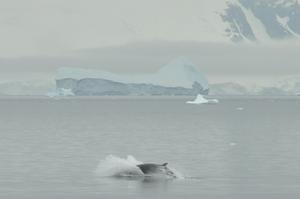 南極上陸クルーズ船 Antarctic Dreamの窓からクジラを見ながらランチ