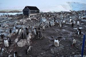 ペンギンで埋め尽くされるチリ南極基地へ上陸