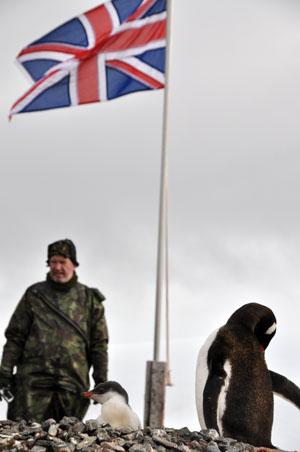 元イギリス南極基地Port Lockroyにもペンギンのコロニーがある