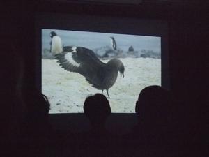南極上陸クルーズの締めくくりは乗客の撮った南極写真上映会