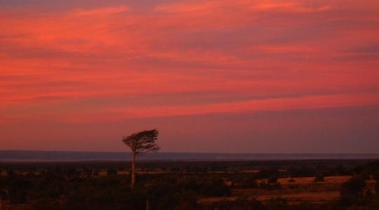 ウシュアイアからプエルト・ナタレスへバス移動。車窓から夕陽に染まるパタゴニア名物パンパと斜めの木を眺める