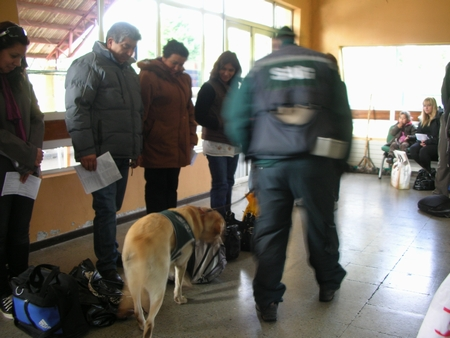 チリ国境の食べ物検査犬その1