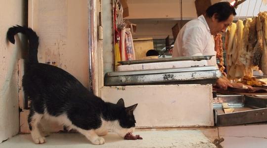 リマの市場の肉屋と猫