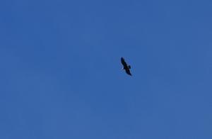 トーレスデルパイネにコンドルが飛ぶ