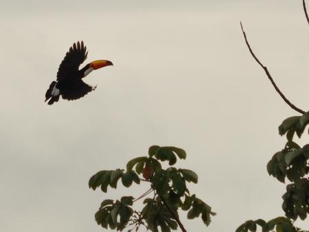 パンパツアーで出会った南米な感じの鳥