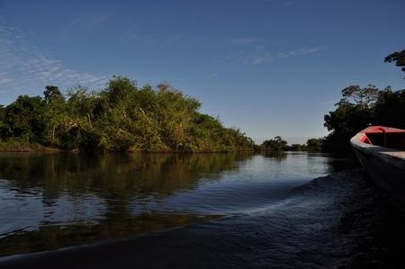 滑らかにジャングルの川を進んでいくボート