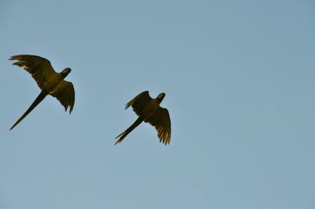 ルレナバケのパンパツアーで見かけたカラフルな南米っぽい鳥