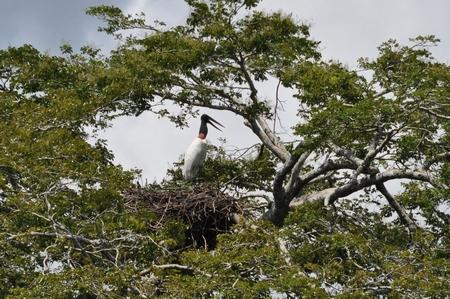 ルレナバケのパンパツアーで見かけた鶴のような鳥