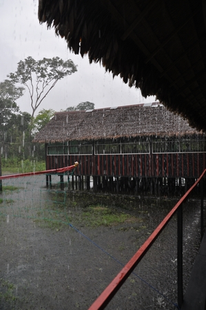 今日のルレナバケのジャングルは朝から大雨