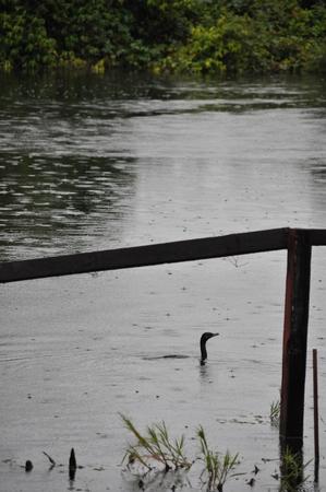 確かにロッジの前の川では水鳥が漁をしている